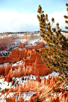 Photograph - Bryce Canyon Pine Side by Marti Green