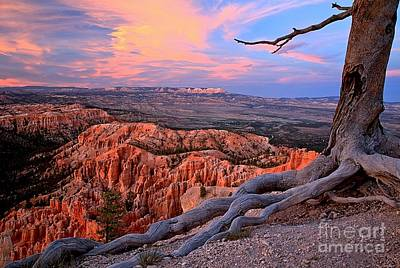 Photograph - Bryce Canyon Roots by Adam Jewell