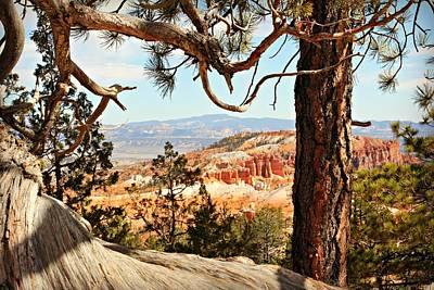 Bryce Canyon Through The Trees Art Print