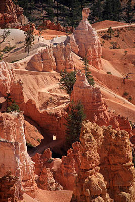 Photograph - Bryce Canyon Trail - Utah by Aidan Moran