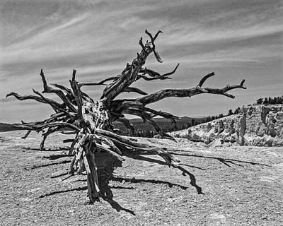 Photograph - Bryce Canyon Tree Art by John Haldane