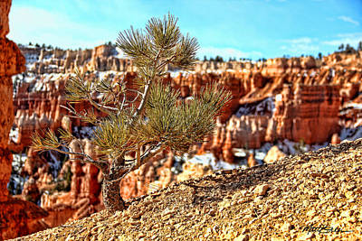 Photograph - Bryce Canyon Tree Up Close by Marti Green