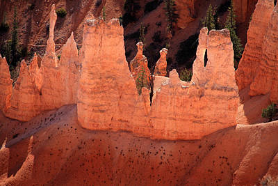 Photograph - Bryce Canyon Light by Aidan Moran