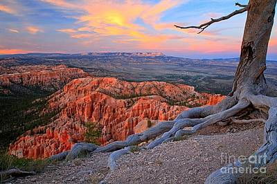 Photograph - Bryce Sunset Glow by Adam Jewell
