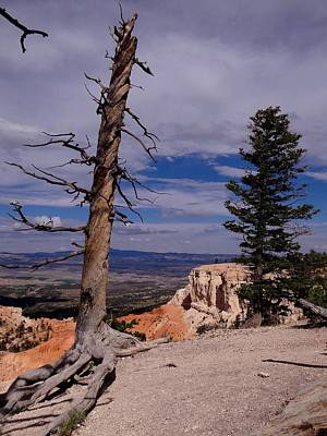 Photograph - Bryce Trees by Keith Stokes