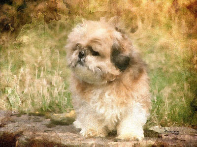 Painting - Shih Tzu In Oil by Ericamaxine Price