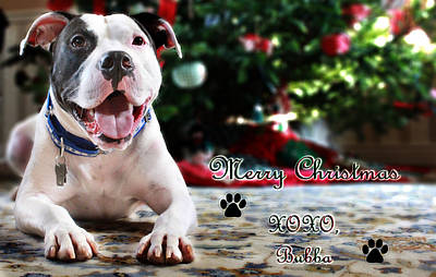 Canines Digital Art - Bubba's First Christmas by Shelley Neff