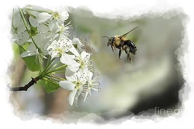 Bubble Bee Looking For Nectar Art Print by Dan Friend