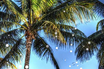 Photograph - Bubbles In The Palms by Frederic BONNEAU Photography