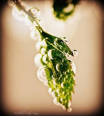 Photograph - Bubbles by Michaela Preston