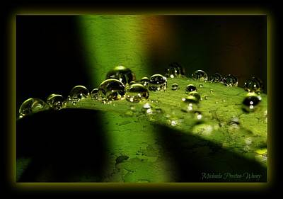 Art Print featuring the photograph Bubbly by Michaela Preston