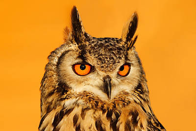 Orange Photograph - Bubo Bubo by Roeselien Raimond