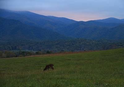 Buck At Sunrise Print by Dan Sproul