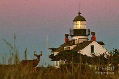 Photograph - Buck By Point Pinos Lighthouse Pacific Grove 2014 by California Views Mr Pat Hathaway Archives