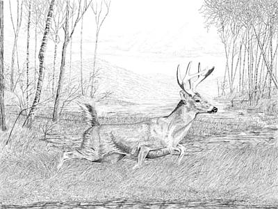 Drawing - Buck by Carl Genovese