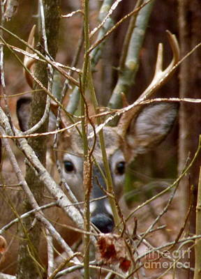 Photograph - Buck Eyes by Jean Wright