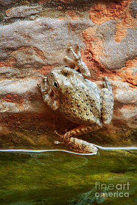 Grand Canyon Photograph - Buck Farm Frog by Inge Johnsson