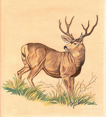 Drawing - Buck Fever by Dale Jackson