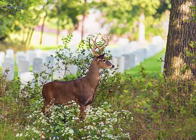 Buck In A Bush Art Print by Bill Tiepelman