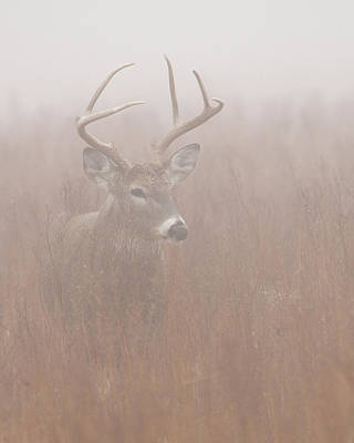 Buck In Fog Art Print