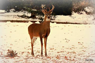 Photograph - Buck In The Autumn Snow by Tami Quigley