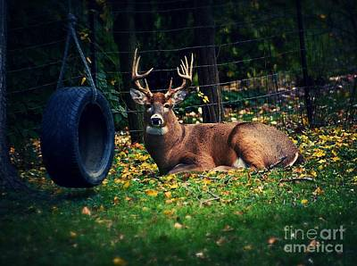 Buck In The Back Yard Art Print