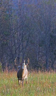 Buck In The Rut Art Print by Dan Sproul