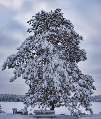 Rhinelander Photograph - Buck Lake Flocked Pine by Dale Kauzlaric