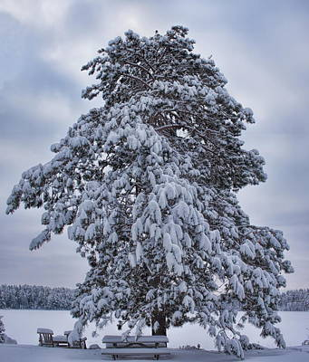 Photograph - Buck Lake Flocked Pine by Dale Kauzlaric