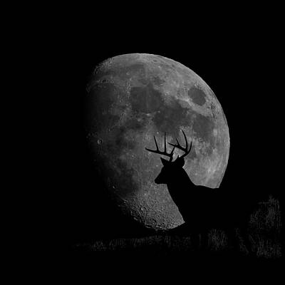 Photograph - Buck Mooned 2 by Ernie Echols