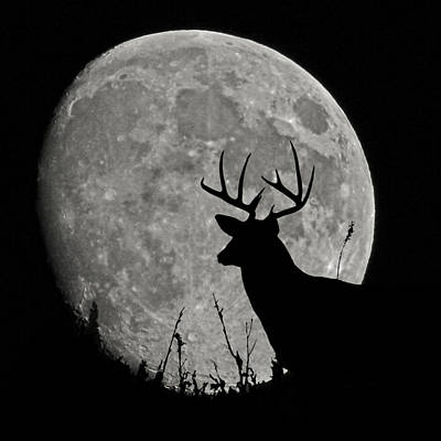 Photograph - Buck Mooned by Ernie Echols