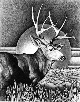 Mule Deer Drawing - Buck Mule Deer by Brian Gilna