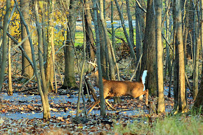 Photograph - Buck On The Run by Lorna R Mills DBA  Lorna Rogers Photography