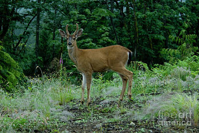 Art Print featuring the photograph Buck by Rod Wiens