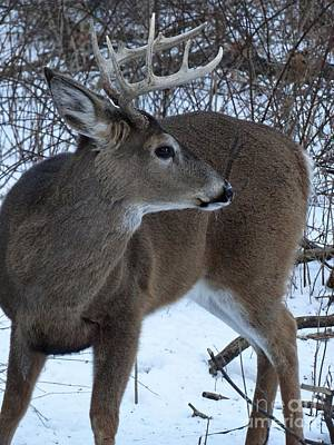 Photograph - Buck  by Scott B Bennett