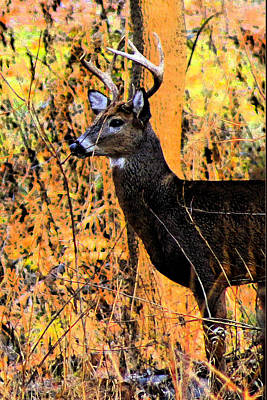 Photograph - Buck Scouting For Doe by Lorna R Mills DBA  Lorna Rogers Photography