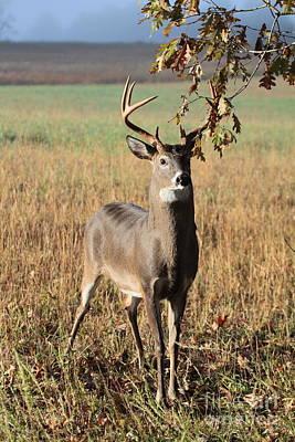 Buck Under A Tree Original by Dwight Cook