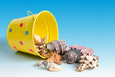Beach Shell Sand Sea Ocean Photograph - Bucket Of Seashells Still Life by Tom Mc Nemar