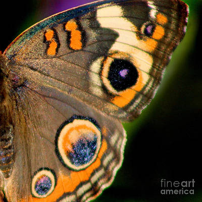 Photograph - Buckeye Butterfly Wing Square by Karen Adams