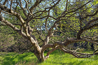 Photograph - Buckeye by Kate Brown