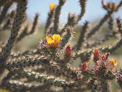 Photograph - Buckhorn Cholla Cactus Arizona Desert by Marianne Campolongo