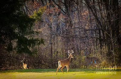 Autumn Peggy Franz Photograph - Bucks And Babes Deer by Peggy Franz