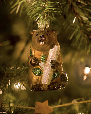 Photograph - Bucky The Beaver At Christmas by Rich Franco