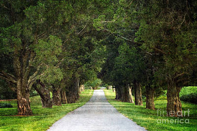 Country Lanes Digital Art - Bucolic - D008564 by Daniel Dempster