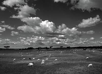 Portugal Photograph - Bucolica by Nana Sousa Dias