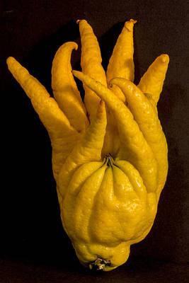Mind Blowing Photograph - Buddah's Hand by Robert Storost