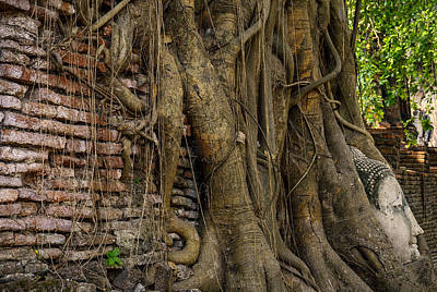 Buddha Head Encased In Tree Roots Art Print