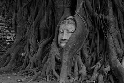 Buddha Head In Roots Of Bodhi Tree Art Print by Zestgolf