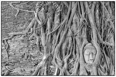 Photograph - Buddha Head Overgrown By Kapok Tree Ayutthaya Thailand by Judith Barath