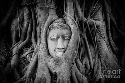 Bodhi Tree Photograph - Buddha In The Banyan Tree by Dean Harte